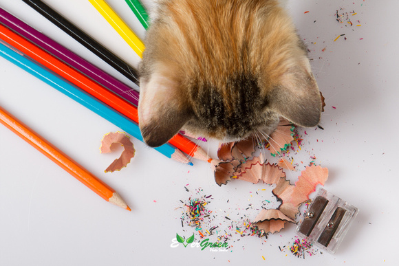 Color pencils with kitty